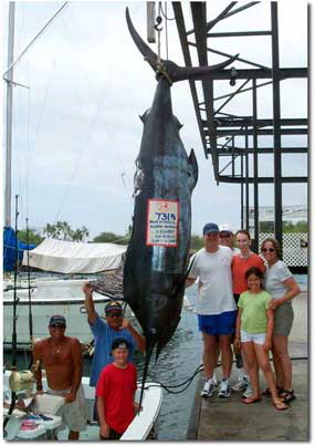 blue marlin, striped marlin, spearfish, mahimahi caught off the Kona coast of Hawaii